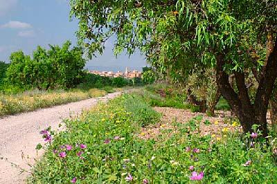 Vía Verde BuretaRED Autor Roberto RegueiroAPT Ruta De La Garnacha